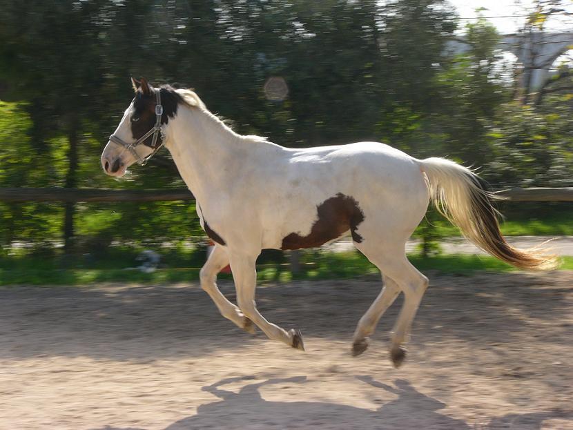 Mon cheval 170831022820152210