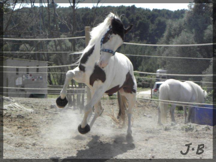Mon cheval 170831023512448677
