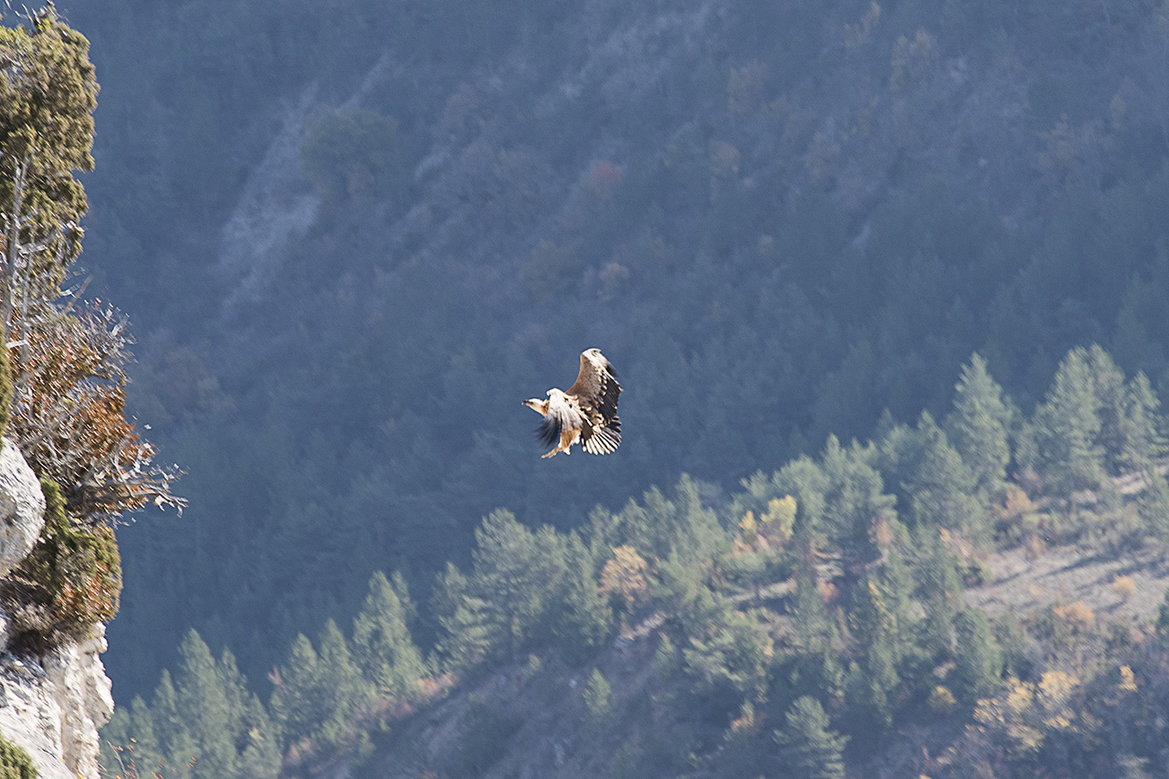 Les vautours de St May en Drome Provencale 171101091511916804