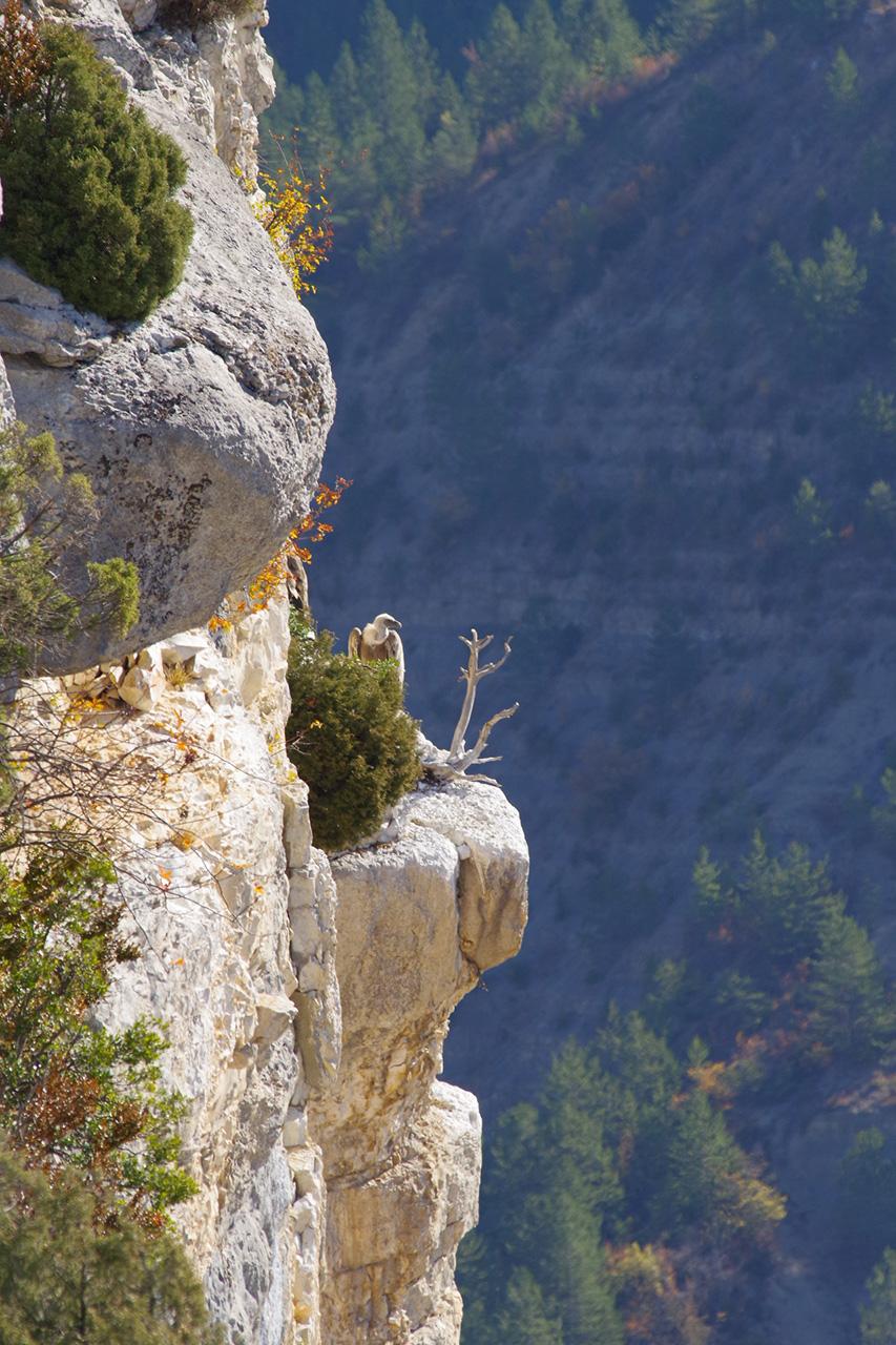 Les vautours de St May en Drome Provencale 171101091512241528