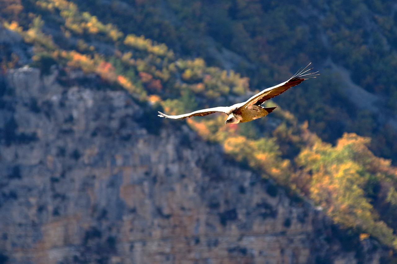 Les vautours de St May en Drome Provencale 17110109151624286