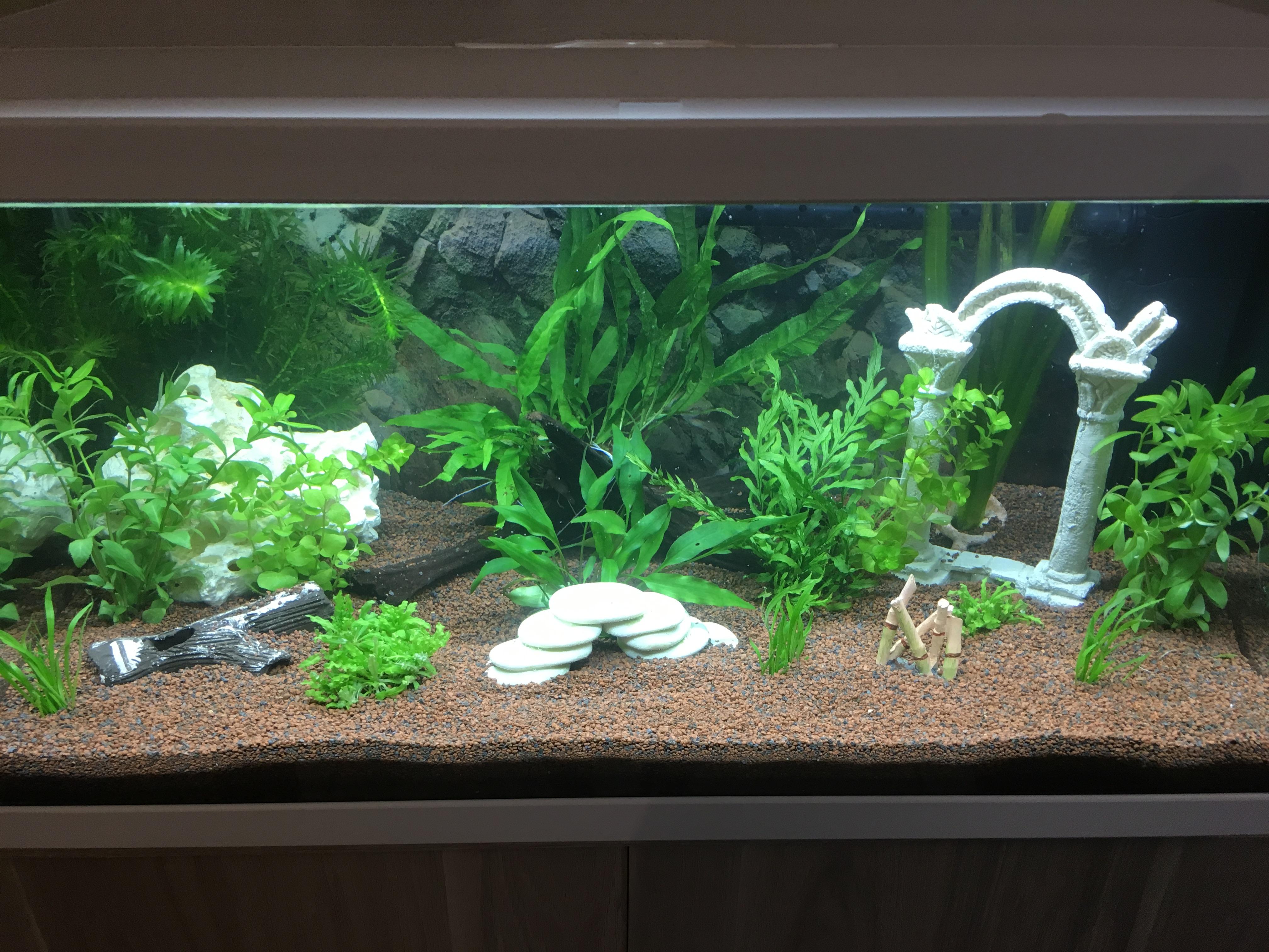Mon premier bac 50 litres forum poissons for Aquarium 50 litres occasion