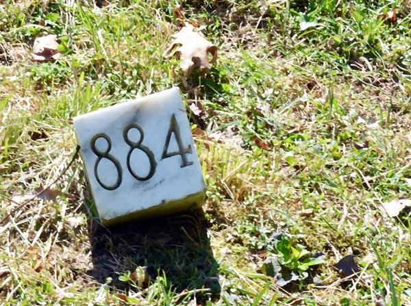 sunnyside-8842