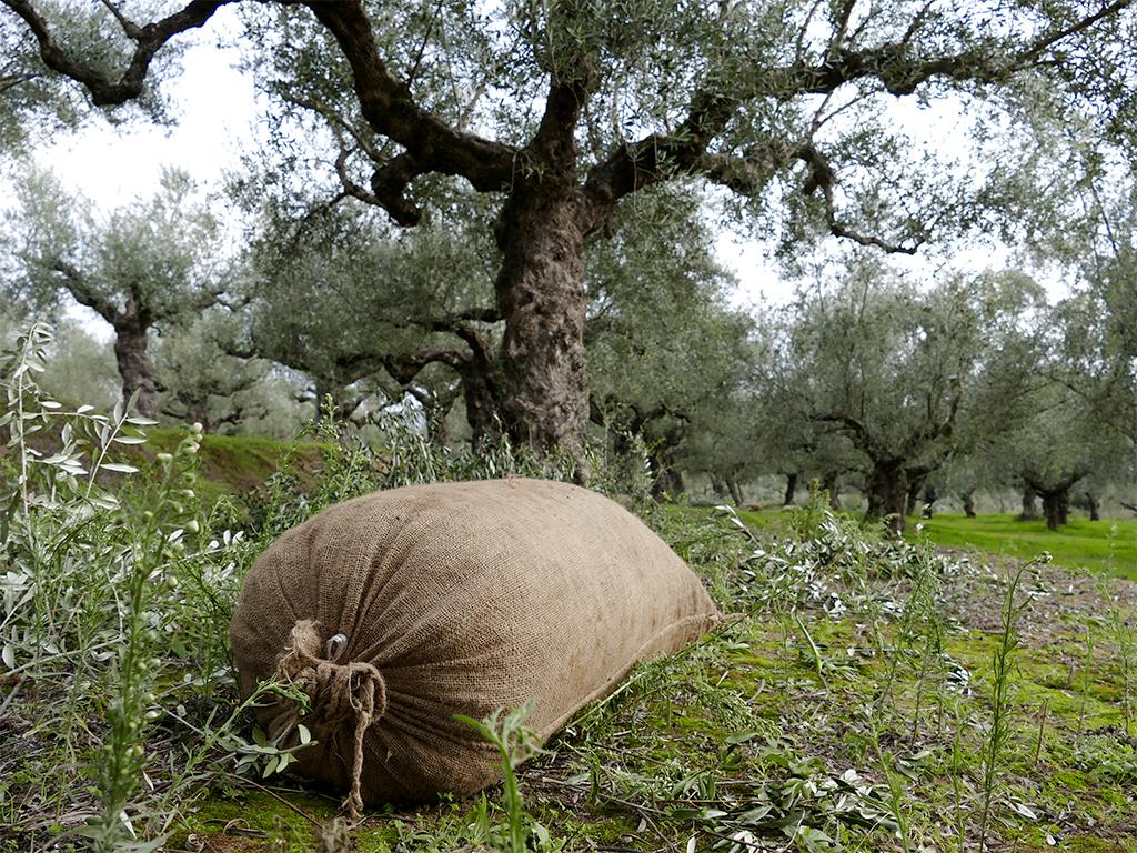 La balade des oliviers 171203112139785838
