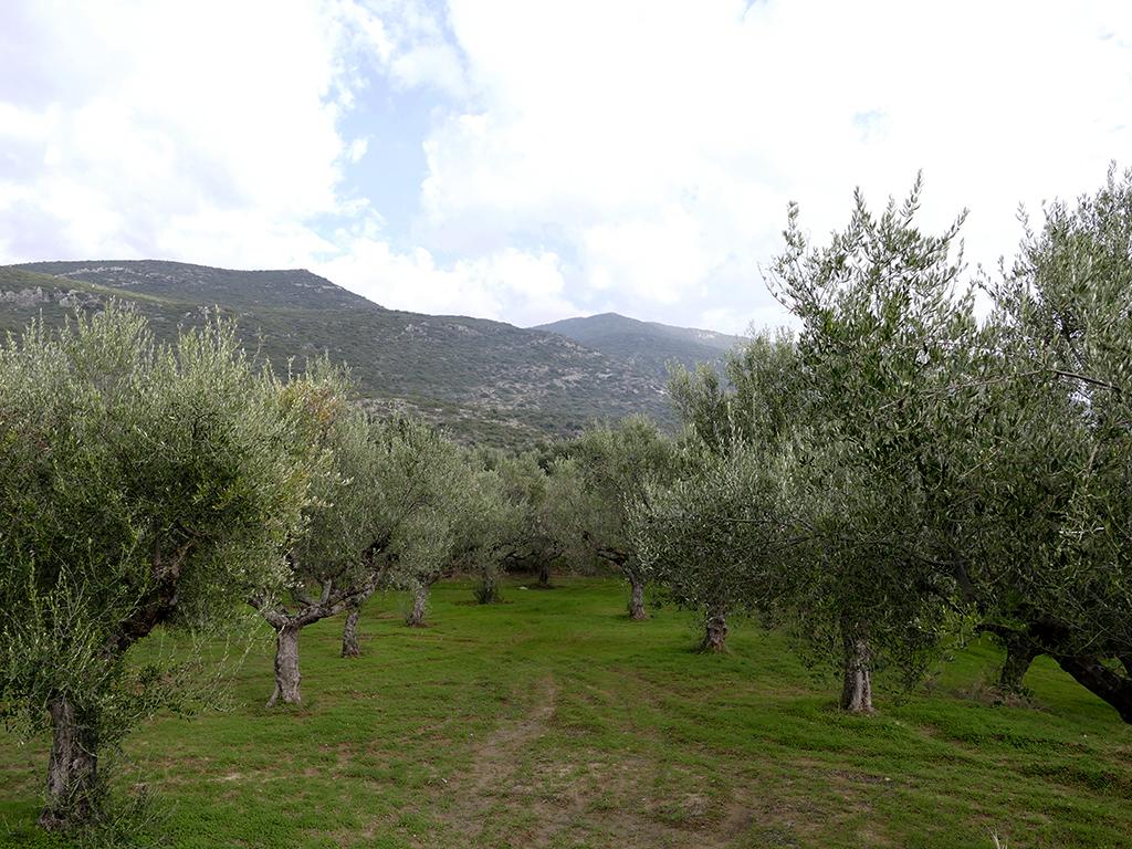 La balade des oliviers 171203112212393599