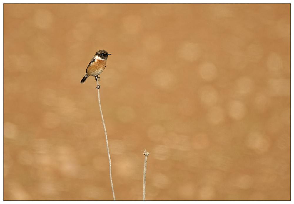 Birds 1a