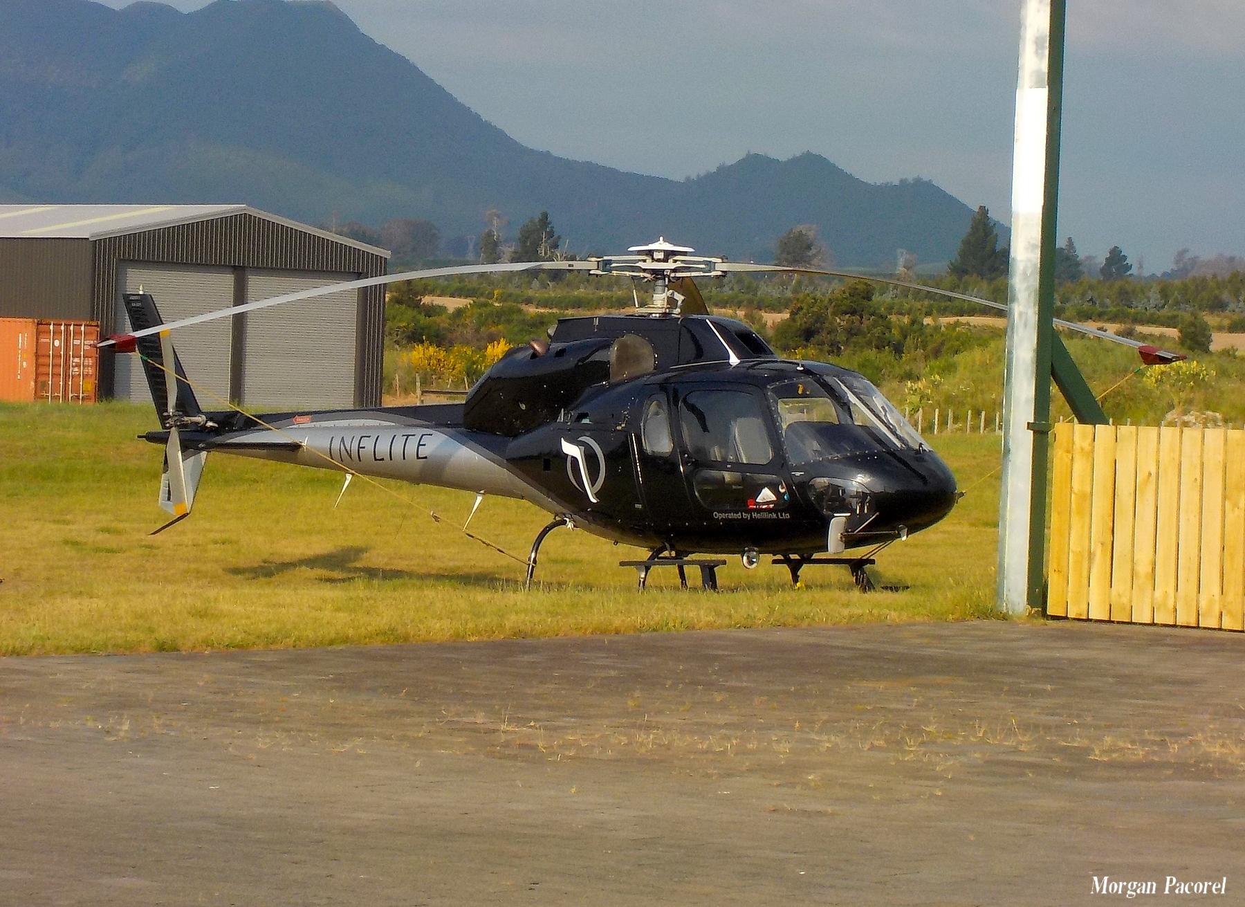 Nouvelle Zélande : spotting à Taupo et Wakatane 180103044940807667