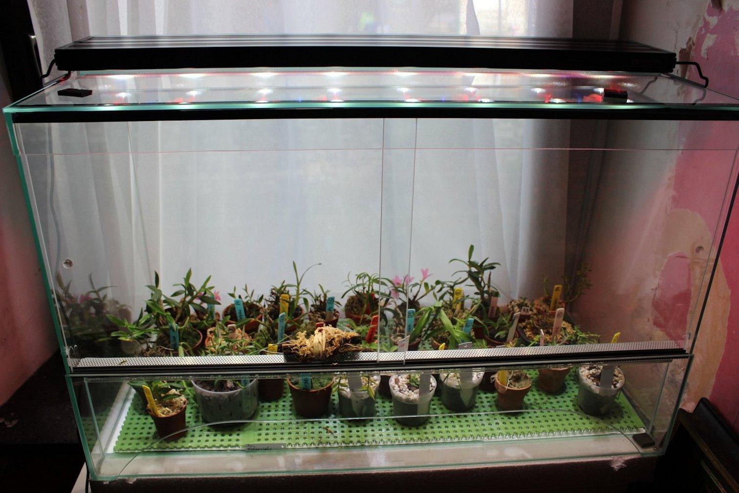 A propos d'orchidarium. 180124102105126740