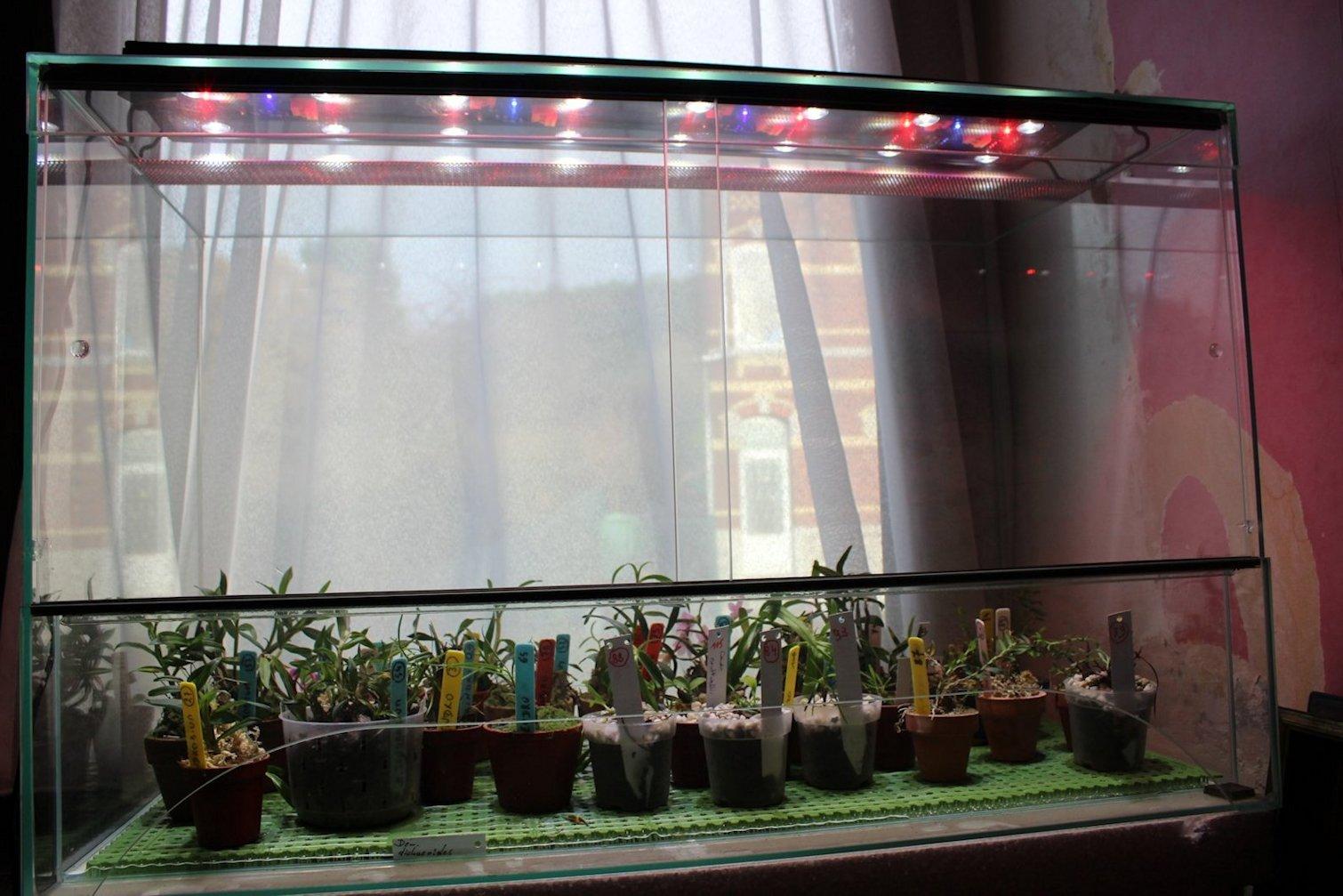 A propos d'orchidarium. 180124102105193768