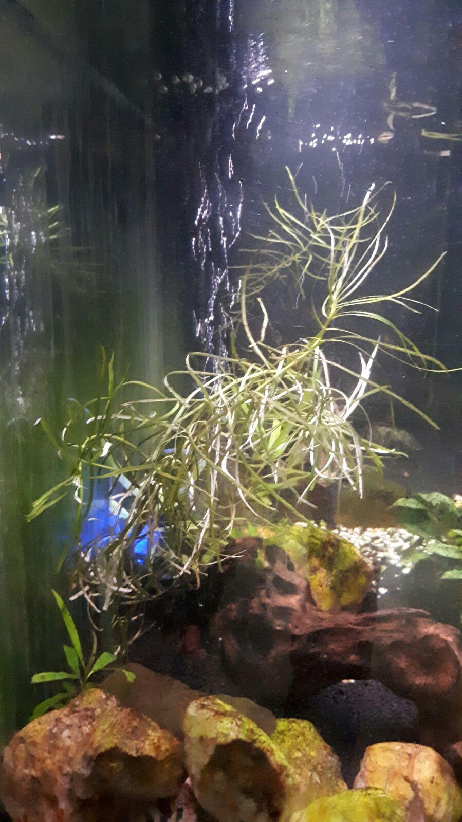 plantes pascal (1)