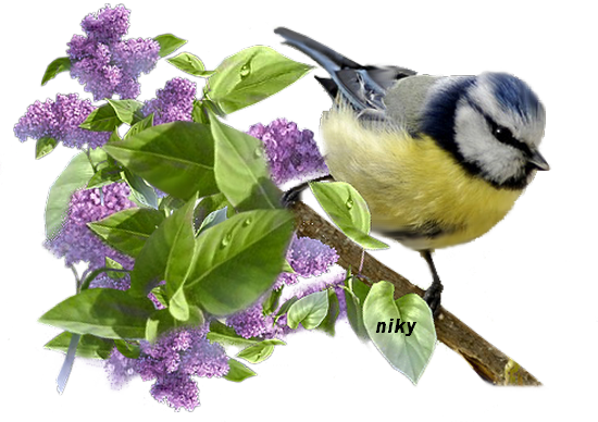 oiseau lilas