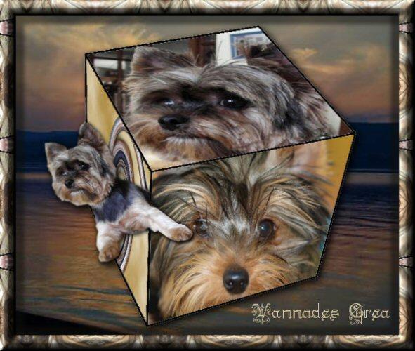 """00 """"Faire un cube décoré,  avec des images ou des photos"""" 180130011516593429"""