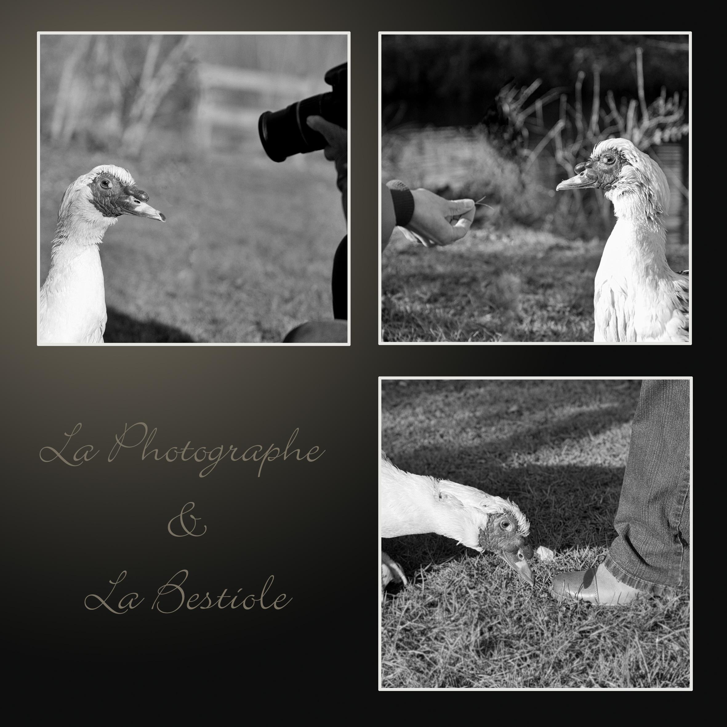 La Photographe et la Bestiole