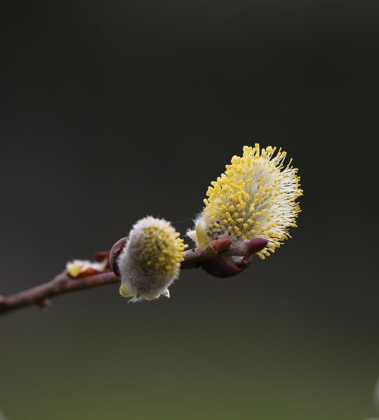 Le printemps arrive ! 180308094713130768