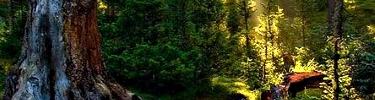 La forêt de Mère Nature