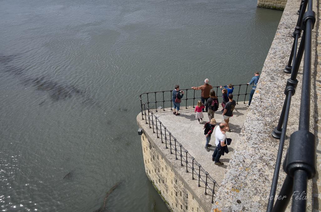 Sur le Pont d'Avignon 18051005410046797