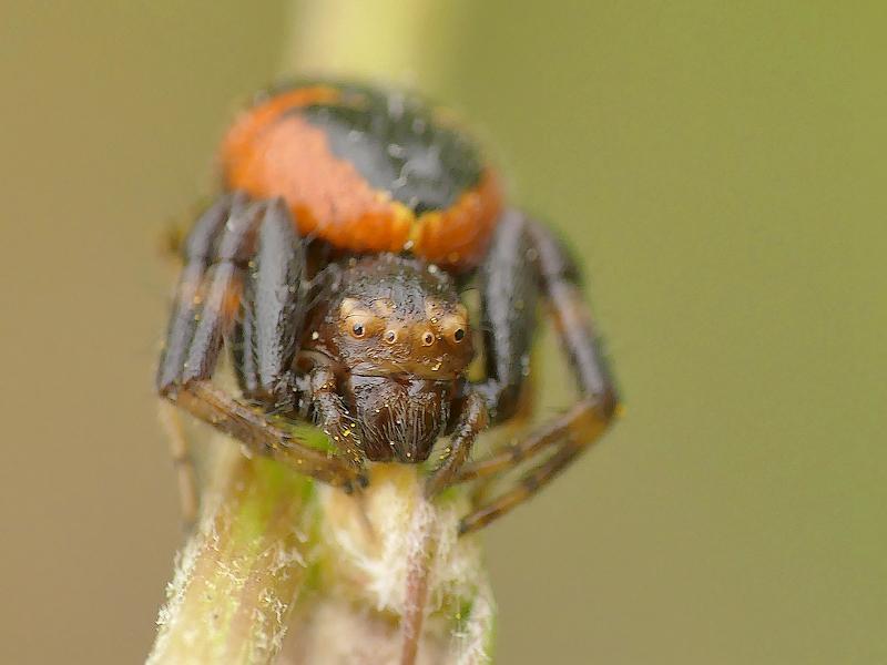 Araignée (119d)