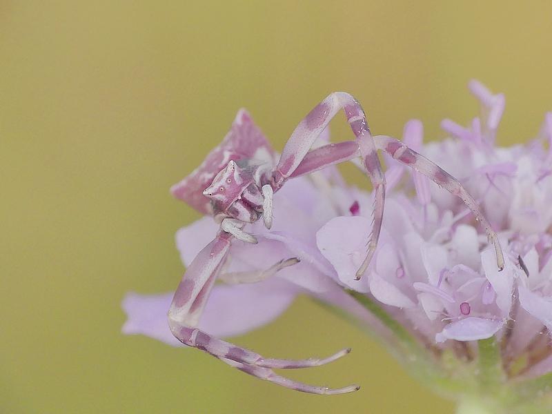 Araignée (546b)