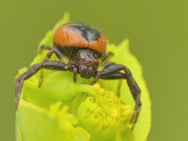 Araignée (322)