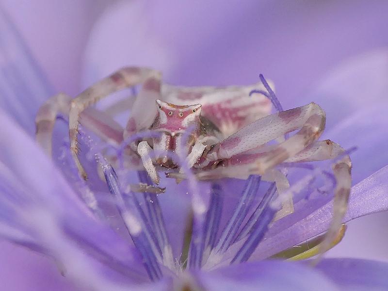 Araignée (1162d)