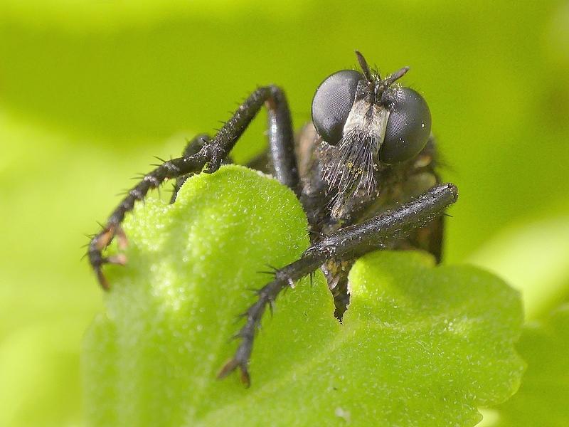Insecte (1180)