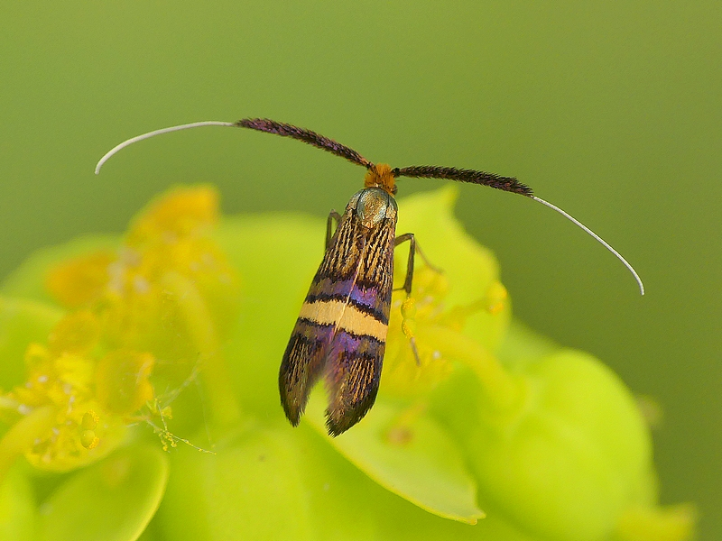 Insecte (313)