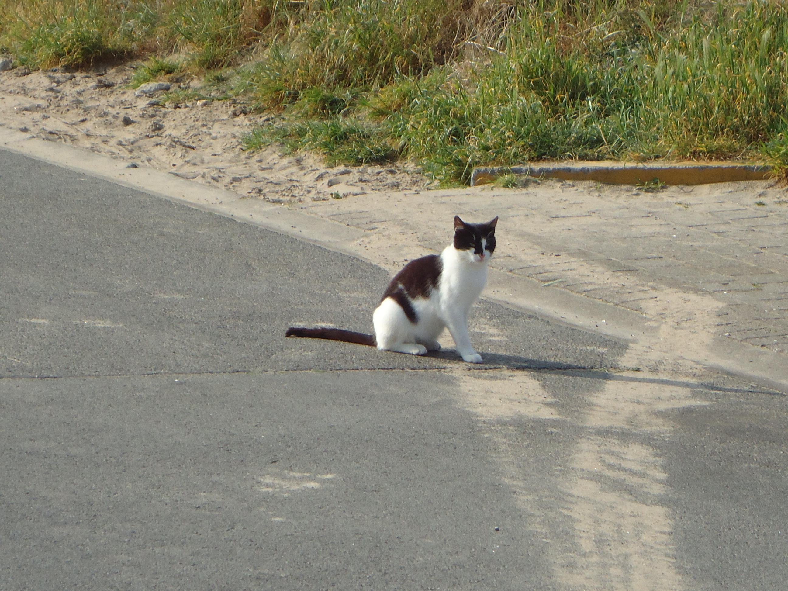 Topic des chats - Page 17 18052206300250435
