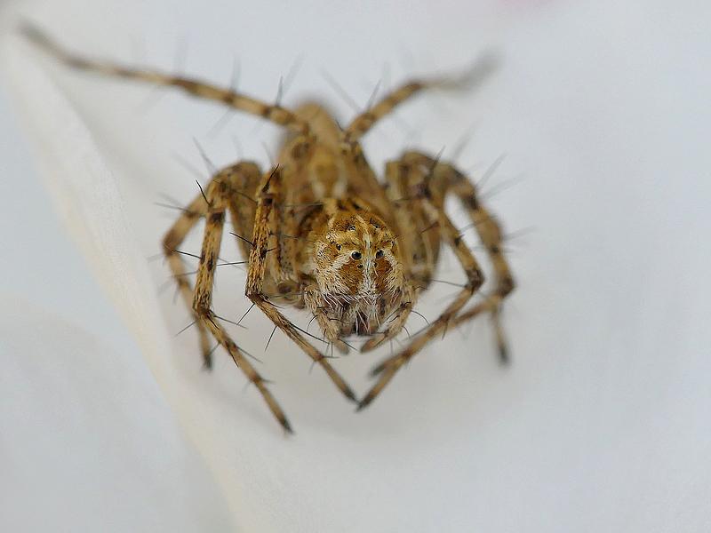 Araignée b (208)