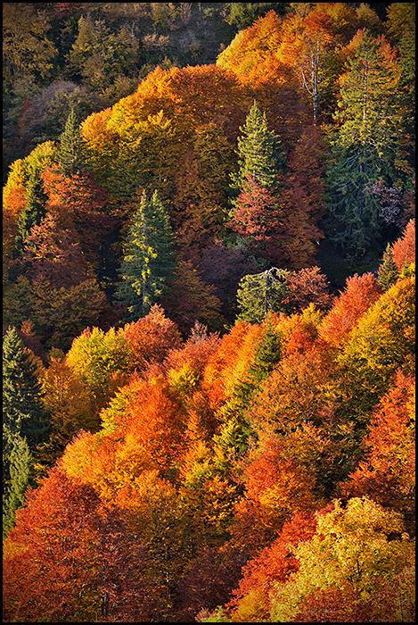 Palette d'automne 18052710344717539
