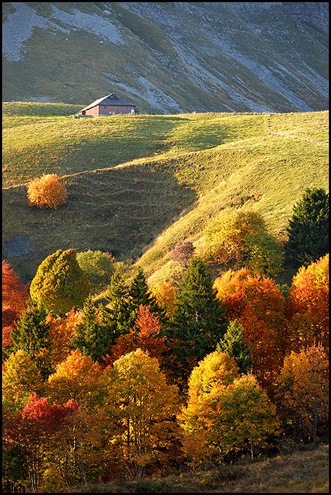 Palette d'automne 180527104433374766