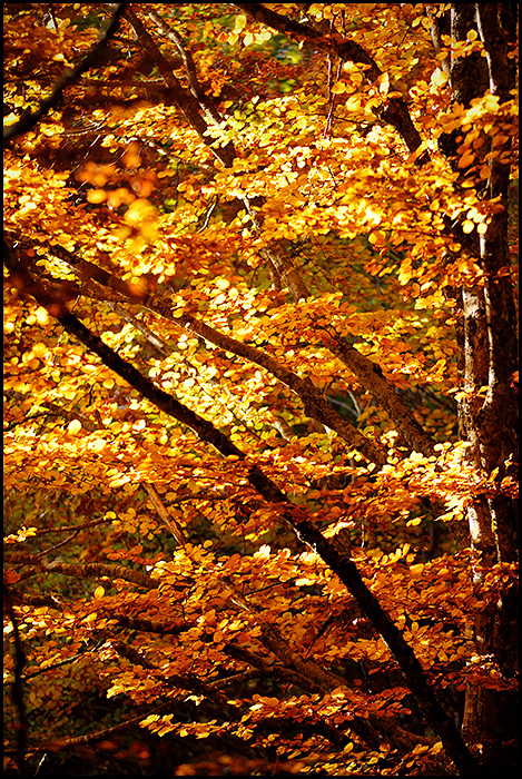 Palette d'automne 180527104434258848