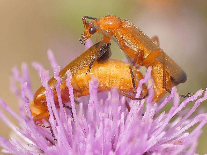 Insecte (610b) - Copie