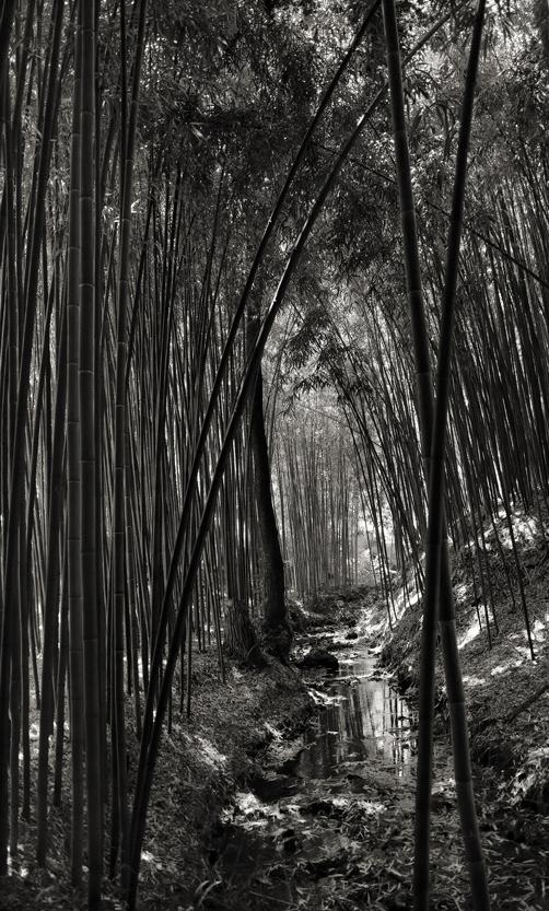 bambou-7.jpg-concour