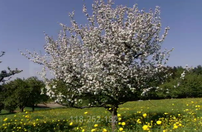 Quand les fraisiers et les pommiers étaient en fleur en Janvier à Arras 180624094807688880