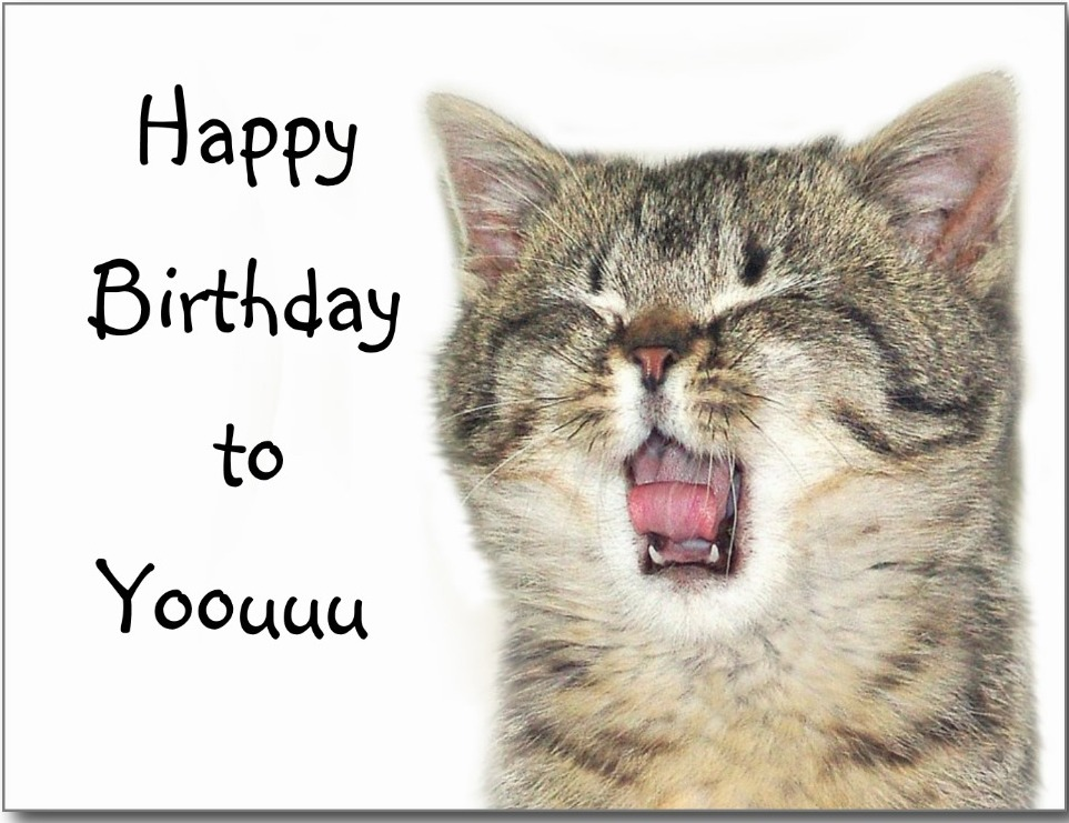 Happy-Birthday-To-You-With-Cat-Image-wb719