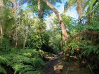 Le forêt de l'île