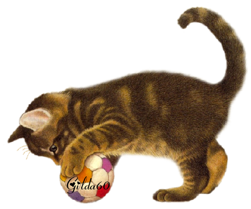 chat automne  2017.Gilda