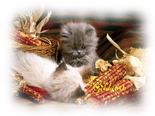 chat automne 2017 (5).Gilda