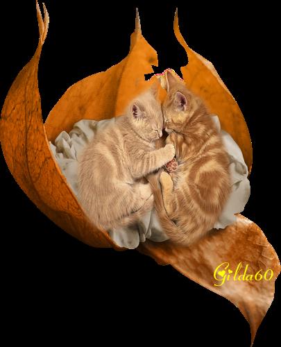 chat nouveau gilda