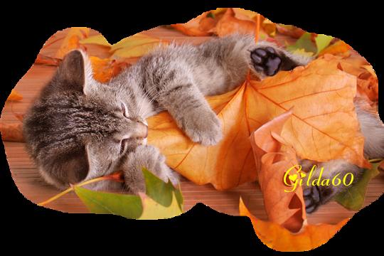 chat  automne 2017 Gilda