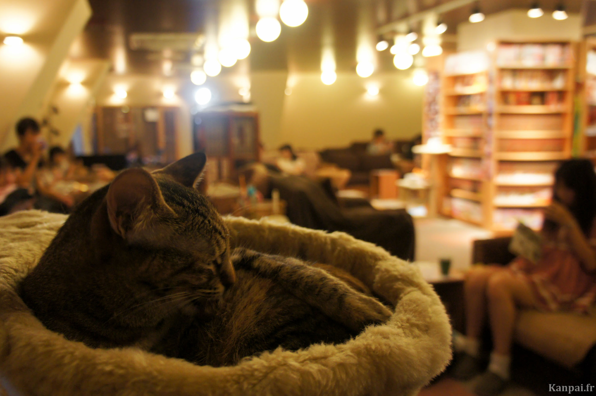 neko-cafe-chat-japonais