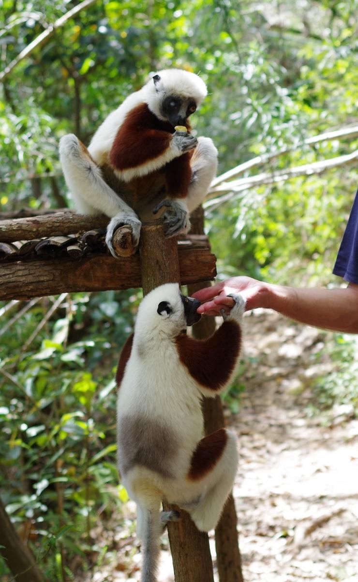 La vie à Madagascar 180919090623331406