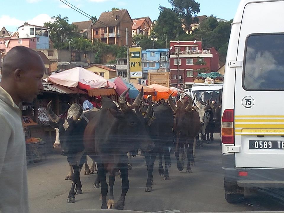 La vie à Madagascar 1809190912521938
