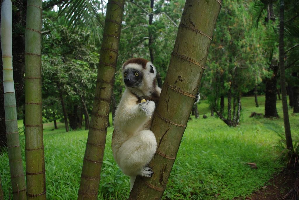 La vie à Madagascar 180919092045364674