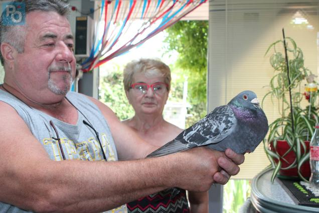pigeon-541897