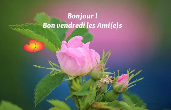 Jeu des Pseudos - Page 2 181005073359584420