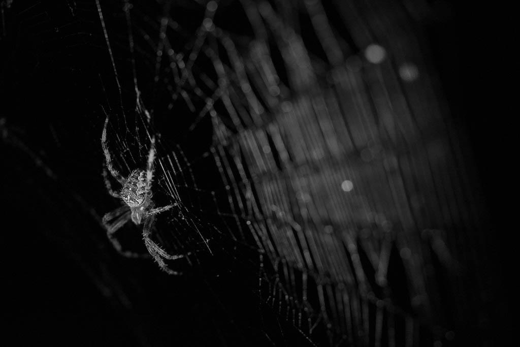 Charmantes araignées 181006035408403363