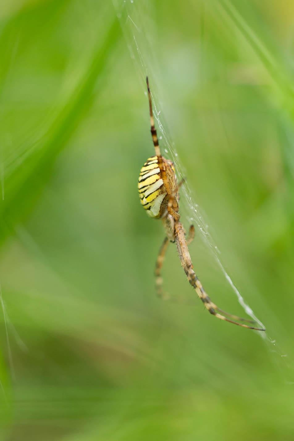 Charmantes araignées 181006035458452640