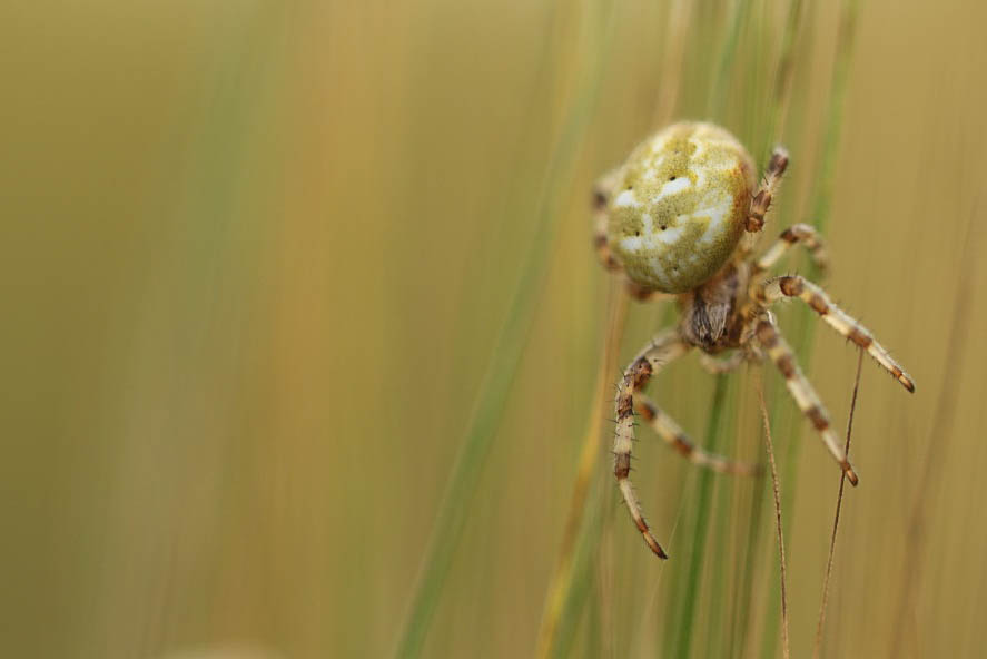 Charmantes araignées 18100603554175856
