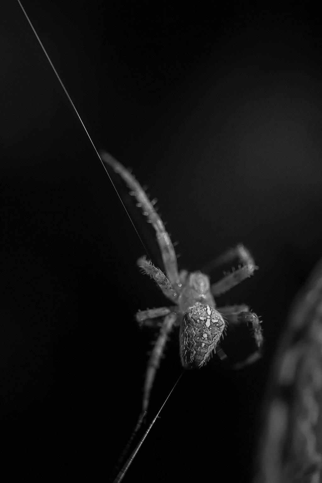 Charmantes araignées 181007054856250843